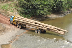 CITES Timber