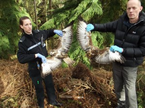 PC Helen Felton and RSPB with two killed buzzards