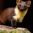 pinemarten2b