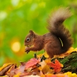 redsquirrel2797-l-campbell-a