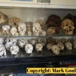 Cabinet-containing-numerous-primate-skulls-seized-by-South-Wales-Police-July-2018-©-Mark-Goulding