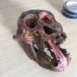 Dayak-carved-orangutan-skull-seized-by-South-Wales-Police-July-2018-©-IG