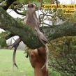 Devon-Cornwall-Police-deer-poaching-investigation