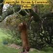 Devon-Cornwall-Police-deer-poaching-investigation2