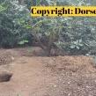 Dorset-Police-badger-sett-2