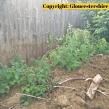 Gloucestershire-Police-badger-investigation3