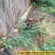Gloucestershire-Police-badger-investigation4