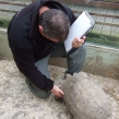 NWCU Officer gets friendly with a Sulcatta tortoise during a warrant (Copy)