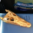 Siamese-Crocodile-skull-coated-with-gold-leaf-seized-by-Kent-police-in-February-2020-©-IG