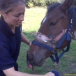 This horse from Kent died from this horrific cruelty