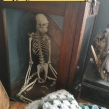 Woolly-monkey-skeleton-seized-by-South-Wales-Police-July-2018-©-Mark-Goulding