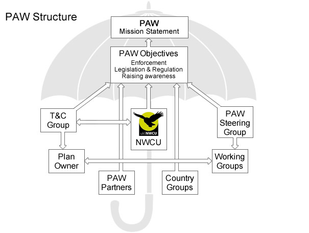 Structure of PAW