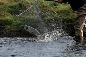 salmonfishing3562LCampbell-a